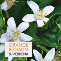 Orange Blossom & Verbena